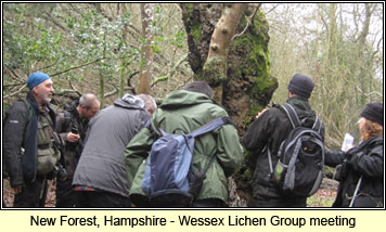 New Forest, Hampshire - WLG meeting
