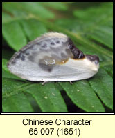Chinese Character, Cilix glaucata