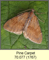 Pine Carpet, Thera firmata