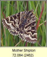 Mother Shipton, Callistege mi