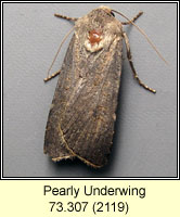 Pearly Underwing, Peridroma saucia